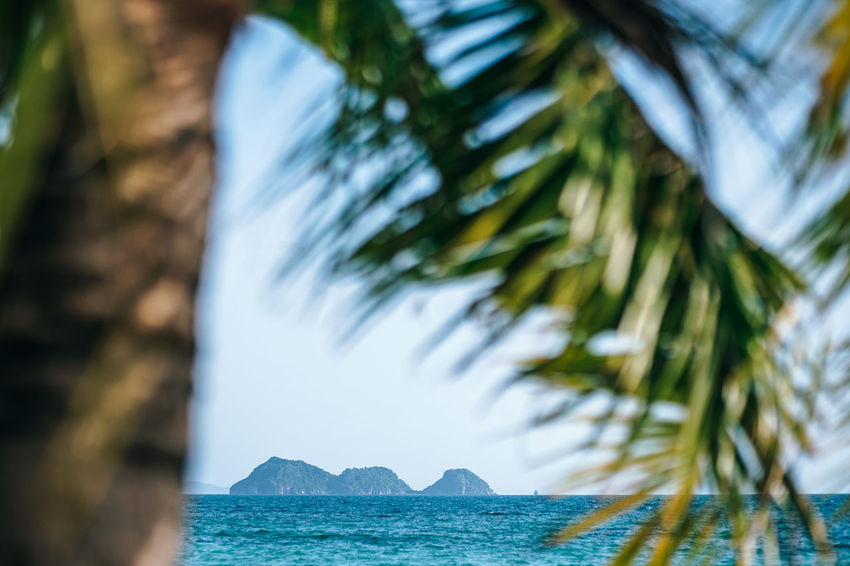 Photograph of the tropical islands in the sea taken from under the tree, island seen through the tree branches. Calm sea water where sun shining at its best. Beautiful Coastline Exotic Green Holiday Nature Palm Palm Tree Beach Blue Clouds Coast Day Horizon Horizon Over Water Island Lagoon Landscape Ocean Scenics Sea Seascape Sky Tropical