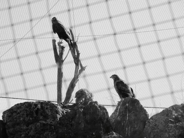 Animals In The Wild Animal Wildlife Animal Themes Outdoors Day Bird Silhouette