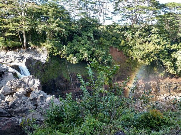 what a great day to see a rainbow at rainbow falls! Waterfalls Rainbow Tree Water Close-up Plant Blade Of Grass Plant Life Botany Growing Full Frame