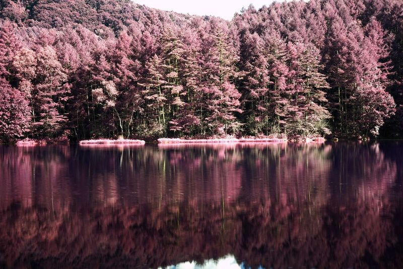 My Year My View Nature Reflection Growth Tree Blossom Water No People Flower Spring Outdoors Beauty In Nature Day Pink Color Beautuful Place EyeEm Best Edits Mishaka Pond 御射鹿池