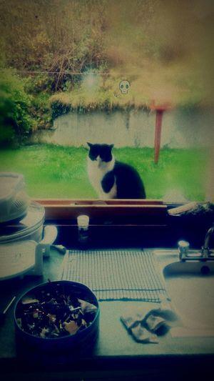 Cat:) First Eyeem Photo
