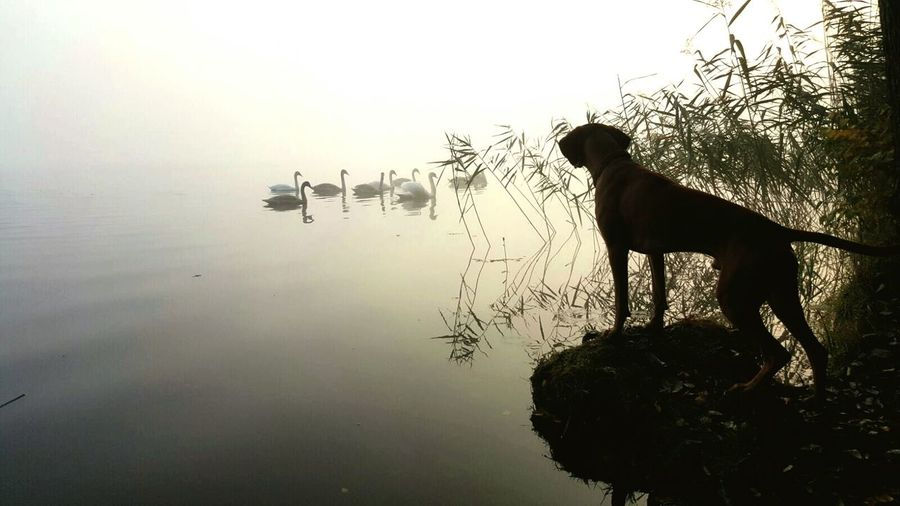 Dogs Of EyeEm Viszla Dog❤ Nature Photography Wildlife Lake View Hundefotografie Jagdhund Hungarian Vizsla Ijuma Von Terra Lebusana Vizslaoftheday Focus On Foreground Beauty In Nature Magyar Vizsla EyeEm Best Shots Eye4photography  Dog Of The Day