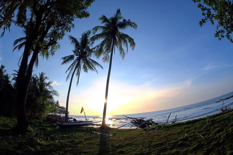 Coconut trees & Sunset Palm Tree Scenics Beauty In Nature Sea Beach No People Horizon Over Water