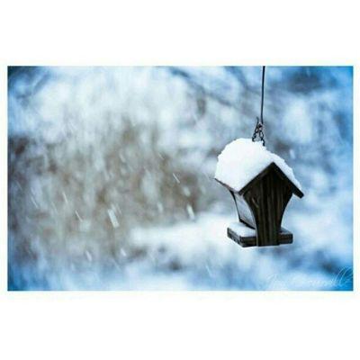 I hope it's a white Christmas tomorrow. :) #snow #igersmissouri #whitechristmas Snow Whitechristmas Igersmissouri