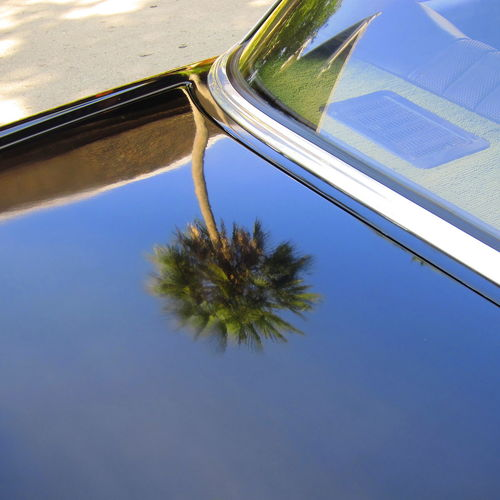 Palm tree reflected on car