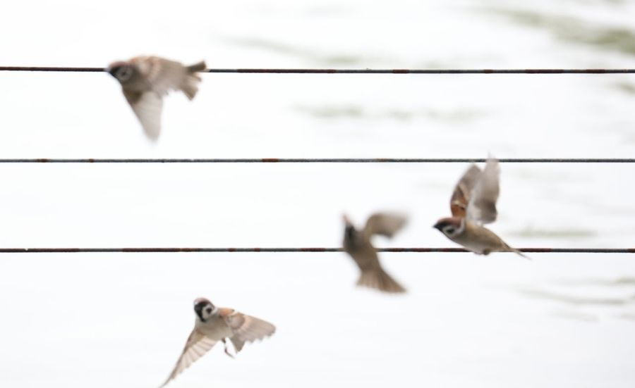 Flying Animal Themes Bird Three Animals Animal Wildlife Animal Animals In The Wild Day No People Spread Wings Nature Mammal Outdoors