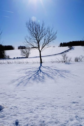 tree Cold White White Background White Color Winter Wintertime Snow Blue Blue Sky Sky Shadow Shadows & Lights Shadows & Lights Shadows Tree Water Snow Cold Temperature Winter Rural Scene Forest Polar Climate Mountain Blue Spruce Tree Frozen Water Coniferous Tree Pine Wood Birch Tree Frost
