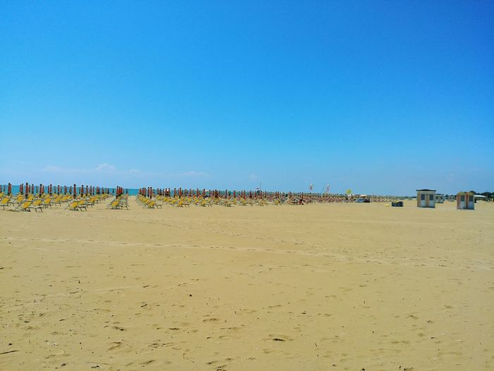 Bird Blue Sand