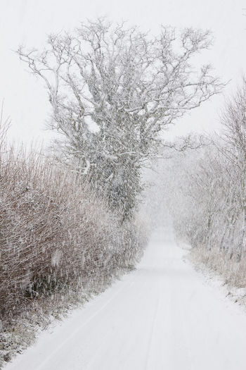 Snow scenes of white out fields and roads in the countryside Fences & Beyond Gate In Field Nature Outdoors People In Field Public Footpath Sign Snow Snow Snowy Field Snowing ❄ Snowy Road White White Fields Winter Country Scene Winter Wonderland