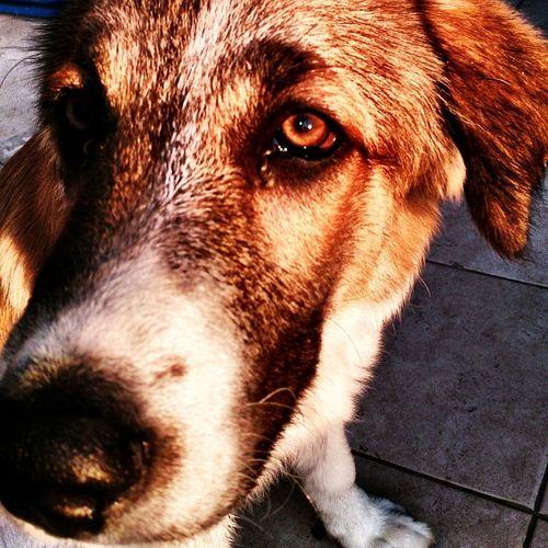 Dog Hdrlove