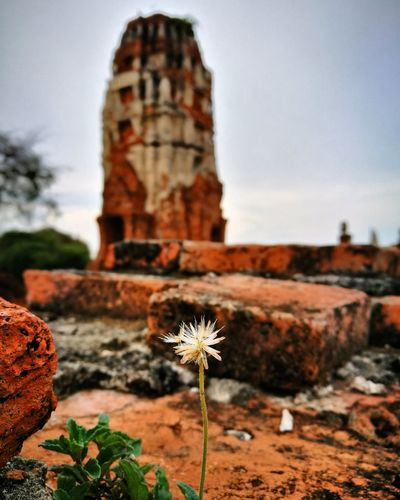Flower Flower Old Ruin Nature Religion Travel Destinations Architecture Plant No People Flower Head Day Landscape Outdoors Beauty In Nature Close-up