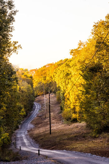 A winding lane in Tennessee in late autumn. Autumn Colors Autumn Leaves Winding Lane Autumn Beauty In Nature Change Clear Sky Day Fall Lane Leaf Nature No People Outdoors Road Scenics Sky Tennessee The Way Forward Tranquility Transportation Tree Winding Winding Road Yellow