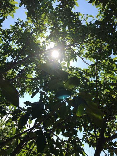 Hot Hot Hot! Sunlight Nature First Eyeem Photo