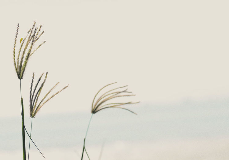Calm outdoors macro grass flower in vintage tone Growth Plant Beauty In Nature Nature Close-up No People Sky Outdoors Fragility Day Vulnerability  Tranquility Leaf Selective Focus Focus On Foreground Plant Part Copy Space Low Angle View Plant Stem Studio Shot Stalk