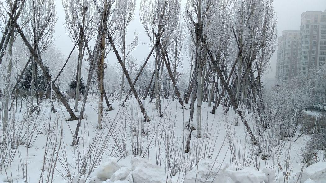 牡丹江边雪景