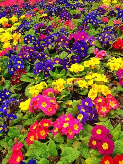 Pantone Colors By GIZMON Colors Nature Taksim Gezi Parkı