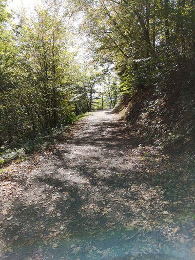 Path Autumn