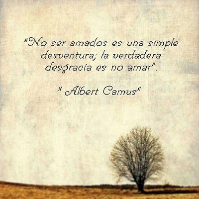 AlbertCamus No ser Amados es una simple desventura; la verdadera desgracia es no Amar InstanPhrases instanfrases InstaMoment Frasesgram Like