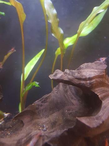 Aquarium UnderSea Sea Life Underwater Water Sea Fish Close-up