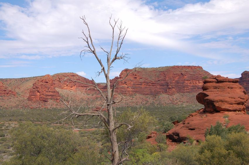 Kings Canyon Landscape Nature Tranquility Beauty In Nature Sky Tree Outdoors No People Bare Tree Arid Climate Day