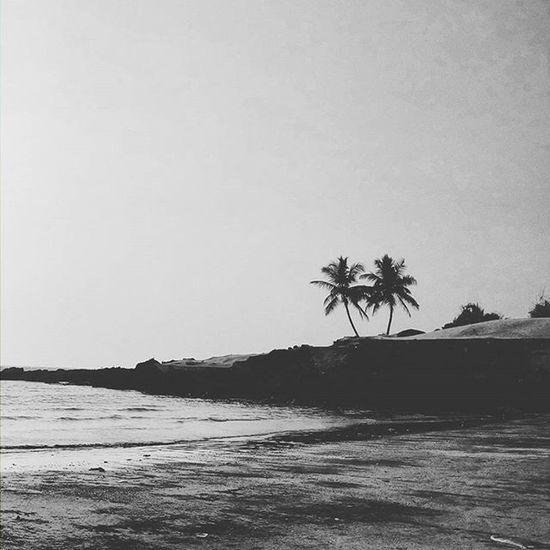 P A L M T R E E S A N D B E A C H Palmtrees Beach Fortheloveofblackandwhite Sea Sky Explorer Monochrome Monochromatic