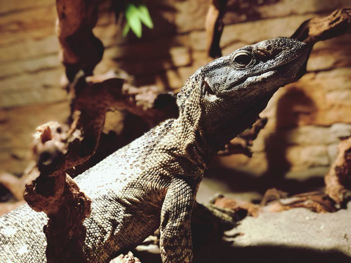 Reptile Focus On Foreground Animal Themes One Animal Animals In The Wild Lizard Day No People