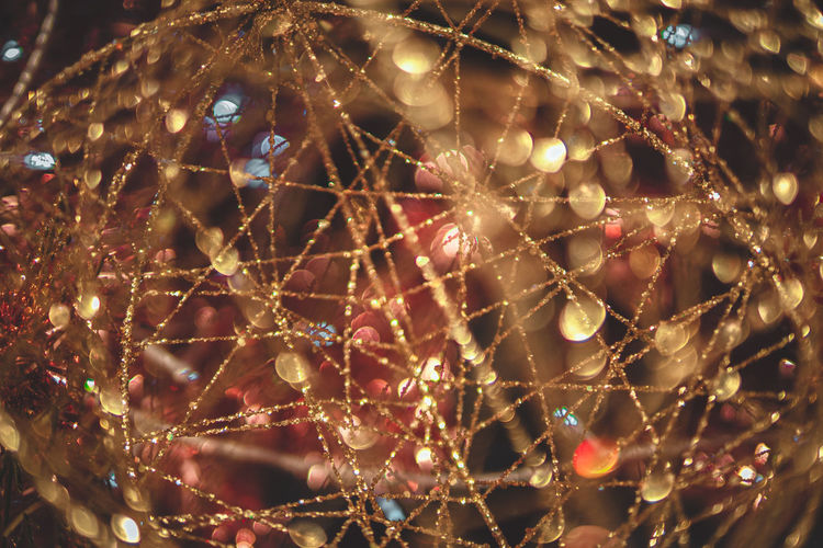 Close-up of christmas tree with spider web at night