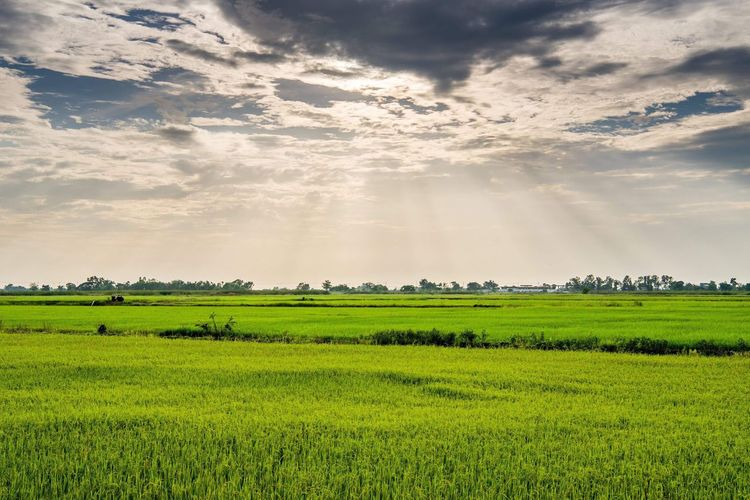 Plant Field Beauty In Nature Landscape Scenics - Nature Agriculture Sky Green Color Land Cloud - Sky Rural Scene Growth Environment Nature Tranquil Scene No People Tranquility Crop  Idyllic Farm
