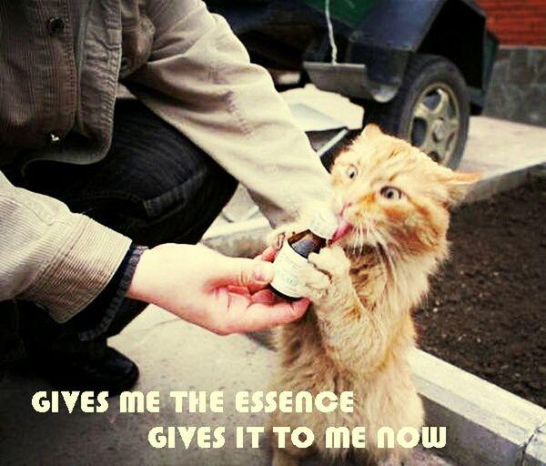 Omg Cute Kitty Lolx