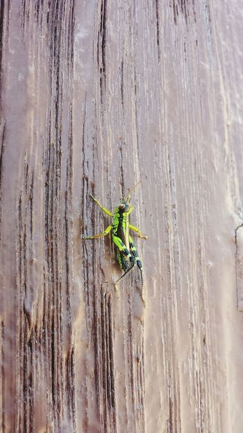 Insect Nature Animal Wildlife Day Outdoors Animals In The Wild No People Fragility Close-up Animal Themes Beauty In Nature