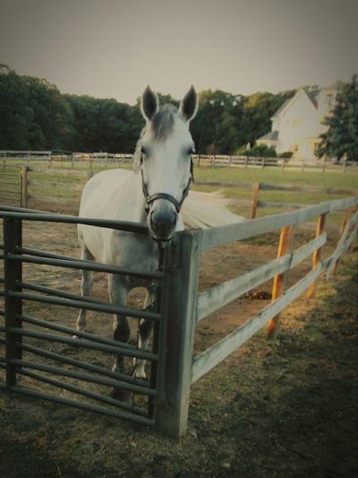 Horse Horse Horseback Riding Horse Ranch EyeEm New Jersey Horselovers Horse Photography  Getty X EyeEm EyeEm Gallery Smartphone Photography EyeEm