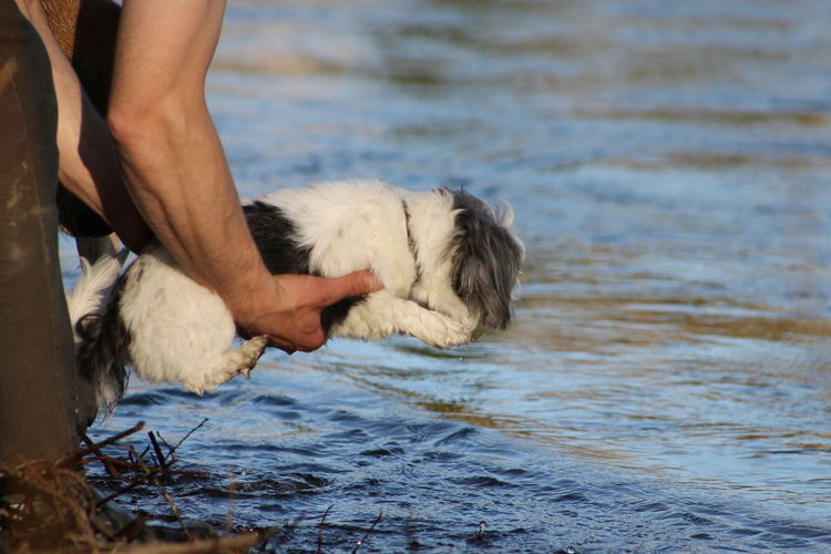 Low Section Of Man Holding Dog At Beach