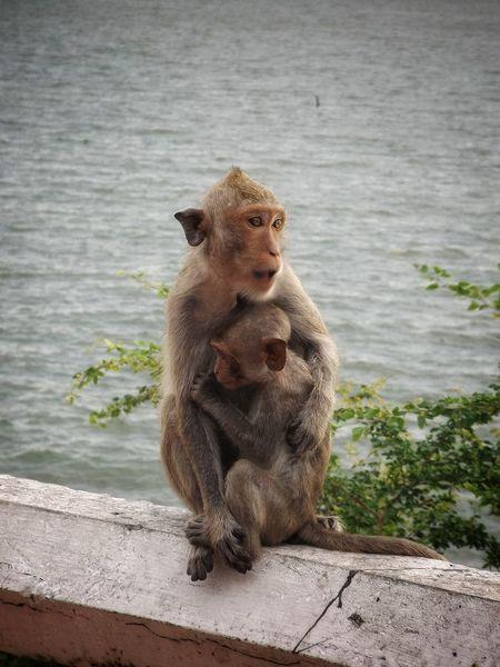 Animal Animal Themes Animal Photography Animal Wildlife Monkey Mountain Monkey Monkeys Animals In The Wild
