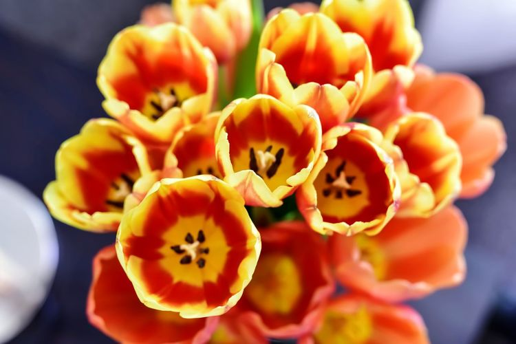 bright bouquet of tulips Bradley Olson Bradleywarren Photography Room For Text Room For Copy Copy Space Copyspace Backgrounds Background Tulip Tulips Tulips Flowers Tulips🌷 Tulips In The Springtime Bright Colors Easter Colorful Flower Head Flower Close-up Plant Flowering Plant Plant Life Petal Stamen Blooming Blossom Botanical Garden In Bloom Pistil Pollen