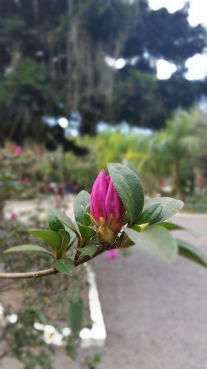 ❤ Flower