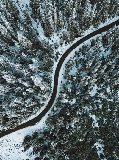 Somewhere in Washington S Curve Treescape Snow Covered Snow ❄ Above The Trees Road Road Trip Washington State Aerial View Droneshot Drone  Dronephotography Aerial Landscape Aerialview Tree Nature Day Beauty In Nature Tranquility Directly Above Land