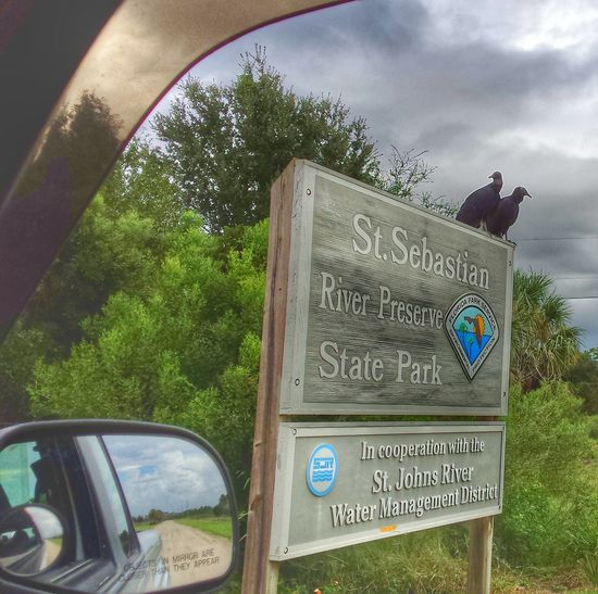 Enter at your own risk! Vultures Vultures Observing me! Bravely, I went into the preserve. Florida Parks And Preserves A Favorite Place for peace of mind , when there aren't vultures at the entrance. The Magic Mission