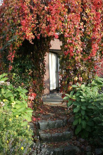 Das Tor zum Hinterhof Steinhude-am-meer.de - Dein Meer-Foto