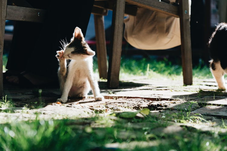 Cat Cute Pet Pet Photography  Outdoors Bucharest