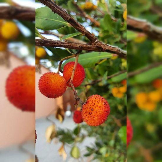 ягоды природапрекрасна прекрасна Nature Nature_perfection
