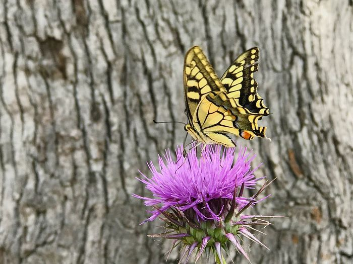 Butterfly Insect Invertebrate Flower Animal Themes Animal Wildlife Animal Flowering Plant Plant Animals In The Wild Animal Wing Beauty In Nature Butterfly - Insect One Animal Fragility Vulnerability  Close-up Nature Freshness Purple Focus On Foreground