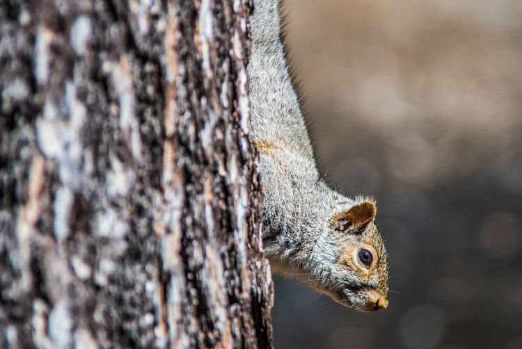 Animal Animal Body Part Animal Eye Animal Head  Animal Themes Animals In The Wild Close-up Day Focus On Foreground Lizard Nature No People One Animal Outdoors Reptile Selective Focus Side View Squirell Vertebrate Wildlife Zoology