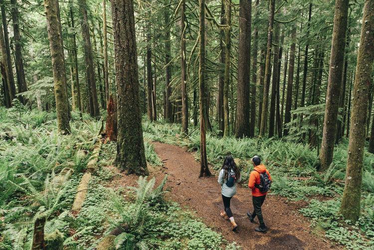 Rear view of men walking on footpath in forest