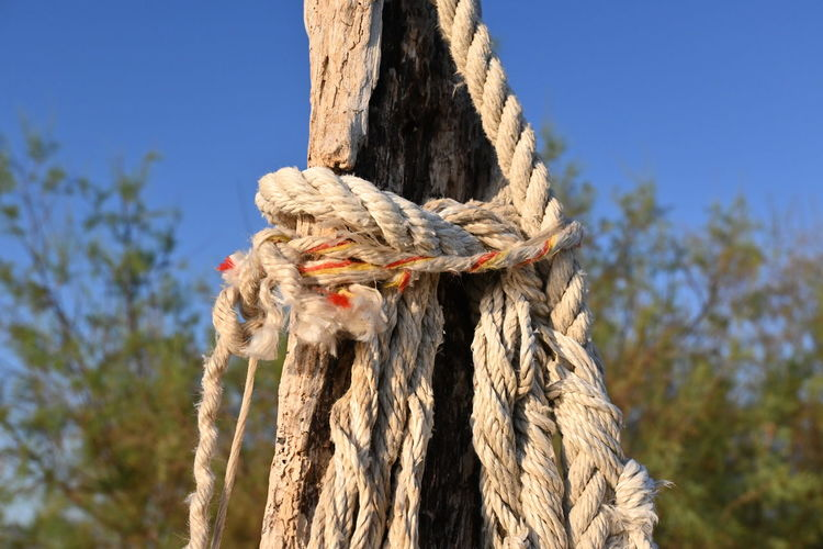 Close-up of rope tied to tree trunk against blue sky