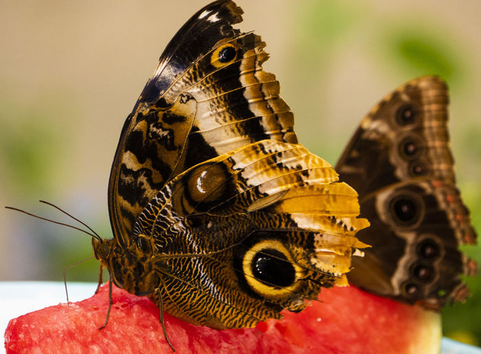 Markings Animal Themes Animal Insect Animal Wildlife Animals In The Wild One Animal Close-up Focus On Foreground Animal Wing Nature Beauty In Nature Butterfly - Insect Flower Natural Pattern Animal Markings Butterfly Pollination Outdoors Butterfly On A Melon