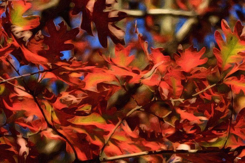 Beauty In Nature Oak Leaves Autumn Paint Edit Photo Autumn Color