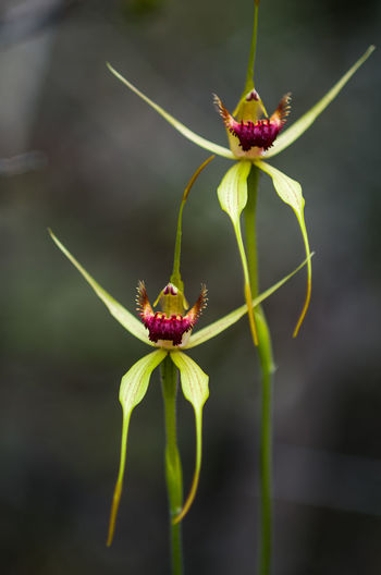 Beauty In Nature Beginnings Bud Close-up Day Flower Flying Focus On Foreground Fragility Green Green Color Growth Nature New Life Orchids Plant Sepal Springtime Stem Wildlife
