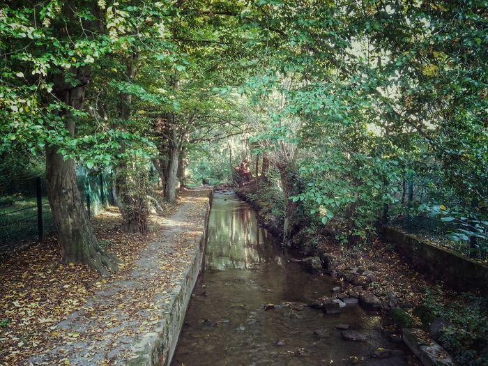 Ein schöner blick auf die Lohnsbach Winweiler Germany Vintage Nature