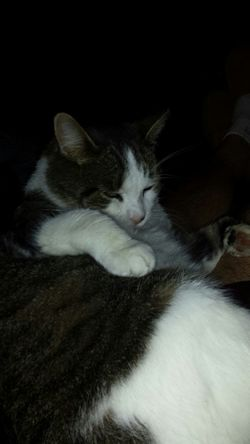 my side kick!!.boo boo kitty