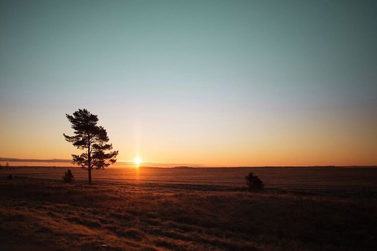 Sunset Nature Silhouette Beauty In Nature Tree Tranquil Scene Scenics Tranquility Landscape Field Sun Sky Outdoors No People Grass Beach Clear Sky Day